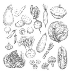 vegetable and mushroom sketch set for food design vector image vector image