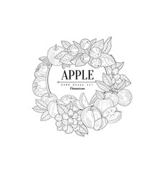 apple set vintage sketch vector image