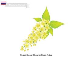 National Flower of Thailand Golden Shower Flower vector image vector image