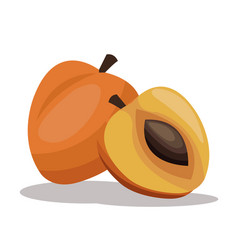 Apricot nutrition diet image vector