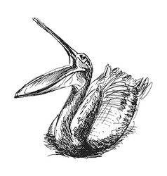 Hand sketch pelican vector