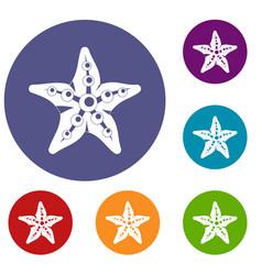 starfish icons set vector image