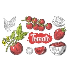 Set of hand drawn tomatoes isolated on white vector