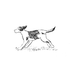 running Dog on grass hand drawing vector image vector image