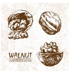 digital walnut hand drawn vector image