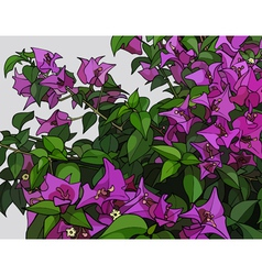 Beautiful bush of pink flowers vector