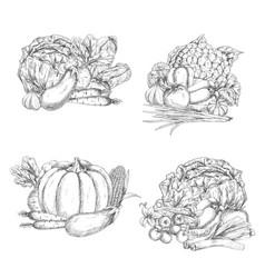Sketch of vegetables or veggies harvest vector