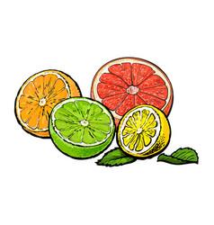 halves of orange grapefruit lime and lemon hand vector image