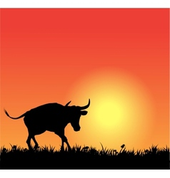 Bull silhouette on sunset vector