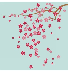 Cherry tree Flowers vector image vector image