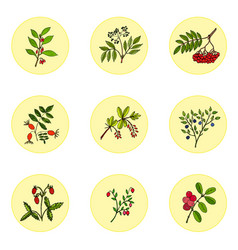 Wild berries set vector