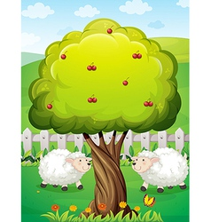 Sheeps inside the fence near the apple tree vector image