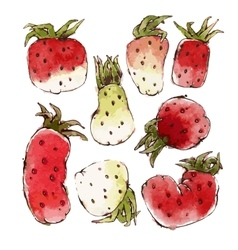 Strawberries set vector