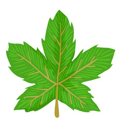 Maple leaf icon cartoon style vector
