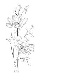 Buttercup flower vector