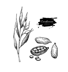 Cardamom hand drawn set with vector image vector image