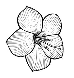 Flowers sketch image vector