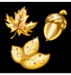 Two leaf and acorn made of gold set vector