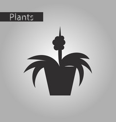 black and white style icon flowers in a pot vector image