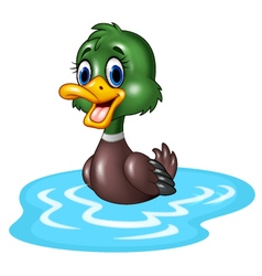 Cartoon duck floats on water vector