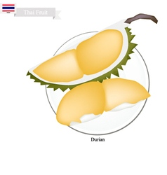 Ripe durian a famous fruit in thailand vector