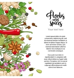 spicy card design with spices and herbs vector image vector image