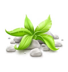 Plant with green leaves in vector
