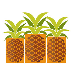 Tropical ripe pineapples with long leaves isolated vector