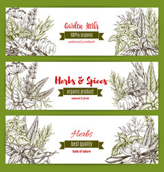 temlpates set for spice and herbs market vector image vector image