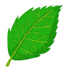 Birch leaf icon cartoon style vector
