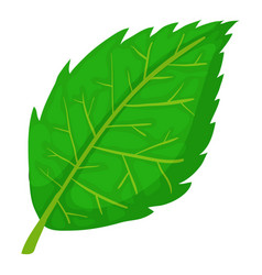 Birch leaf icon cartoon style vector