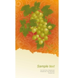 Template with vine grapes vector image