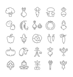 Vegetables Line Icons 6 3 vector image vector image