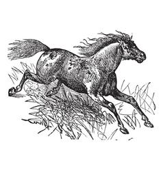 Mustang vintage engraving vector image vector image