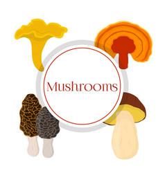 Mushroom set - bolete reishi chanterelle morel vector