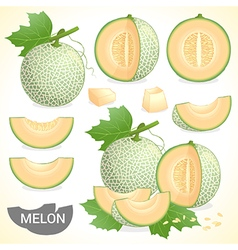Set of cantaloupe melon fruit vector