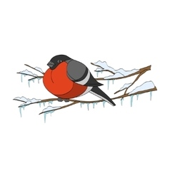Bullfinch on winter branch vector