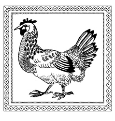 Pen drawing chicken vector