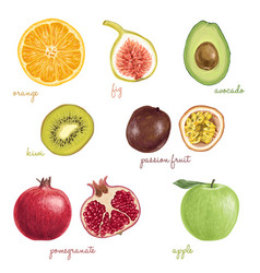 hand drawn detailed exotic fruits vector image vector image