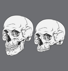 Line art anatomically correct human skulls set vector