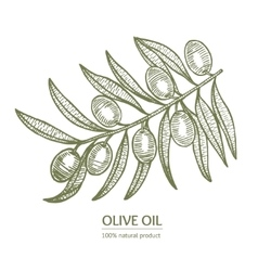 Olive Branch Hand Draw Sketch vector image vector image