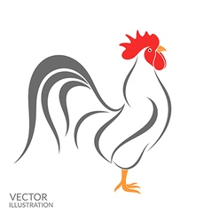 Rooster Isolated bird on white background vector image
