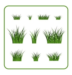 Green grass bushes isolated plant vector