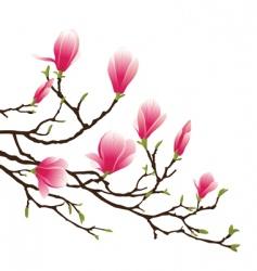 Magnolia blossom vector