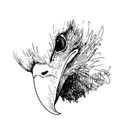 eagle bird doodle hand drawn vector image