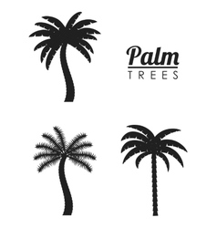 Palm tree nature plant design vector image