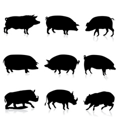 Farm pigs and wild boars silhouette vector