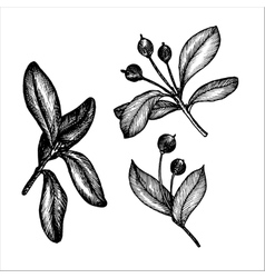 vintage floral set vector image vector image