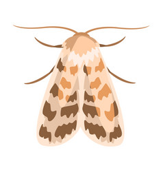 ash sphinx moth or manduca jasminearum colorful vector image vector image