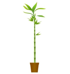 Bamboo in brown pot vector image